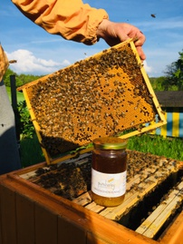 Honing van de imker